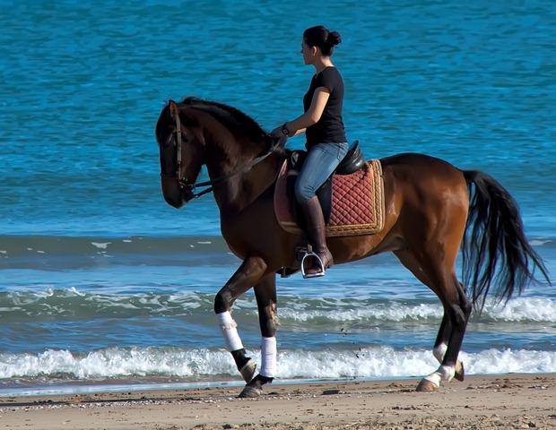clases-de-equitacion-Gandia1 vía centro hípica gandía equitación deporte